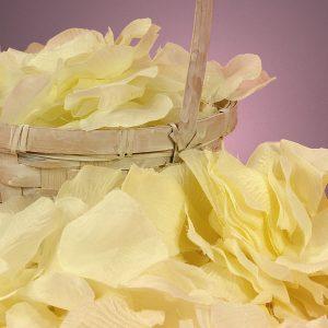 Silk Ivory Rose Petals - Wedding Packaging by Paper Mart